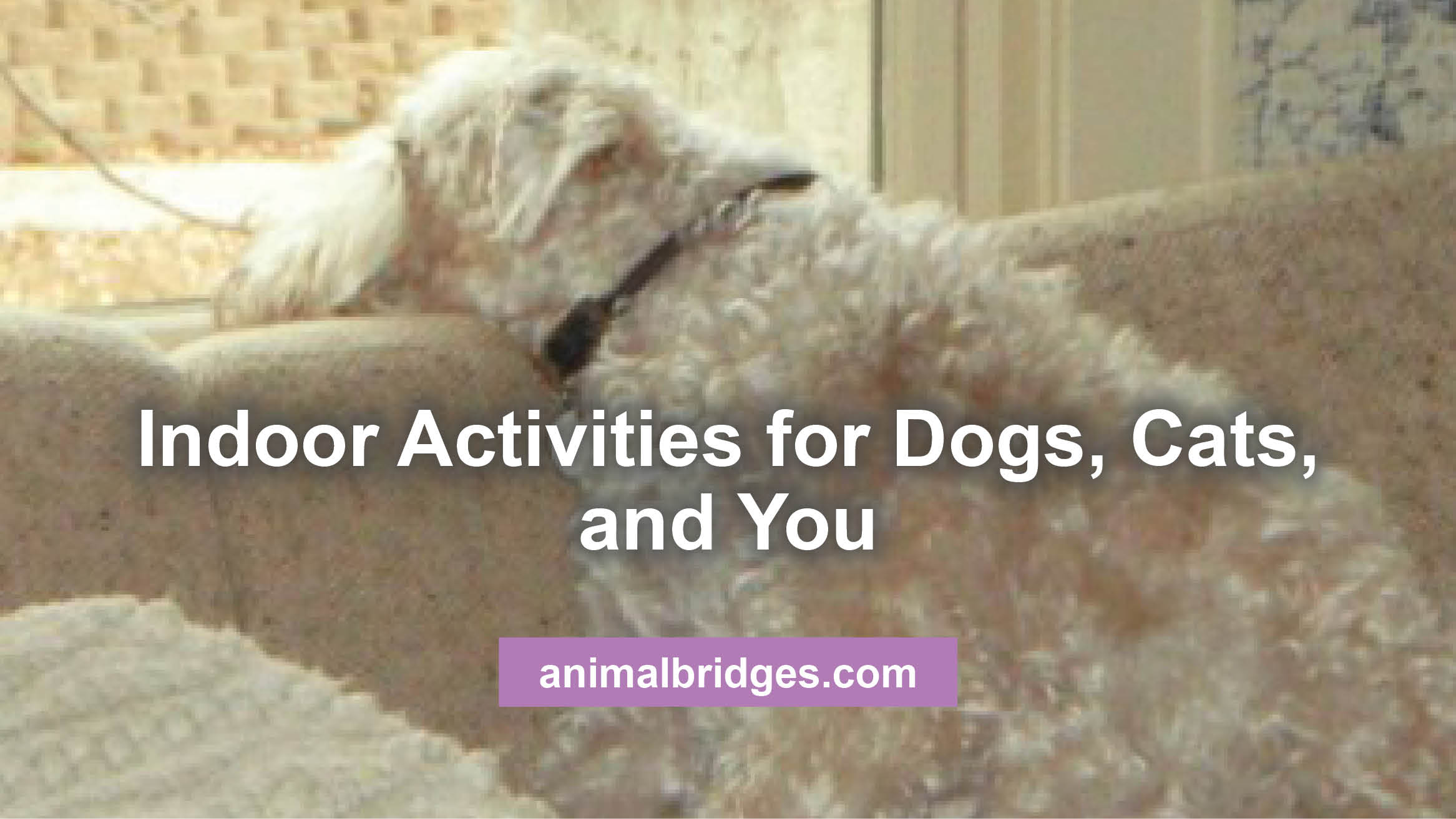 Indoor activities for dogs, cats, and you