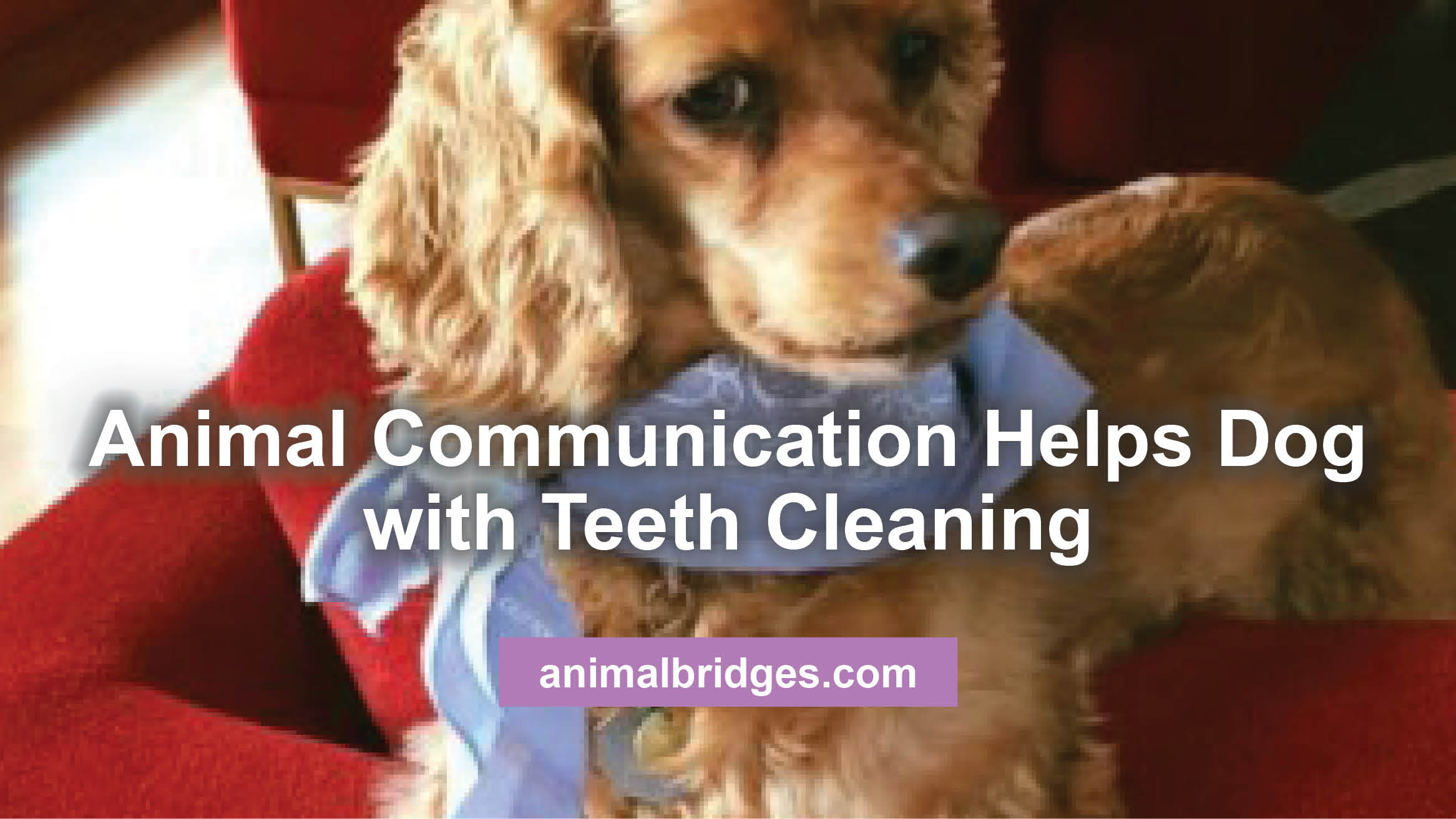Animal communication helps dog with teeth cleaning.