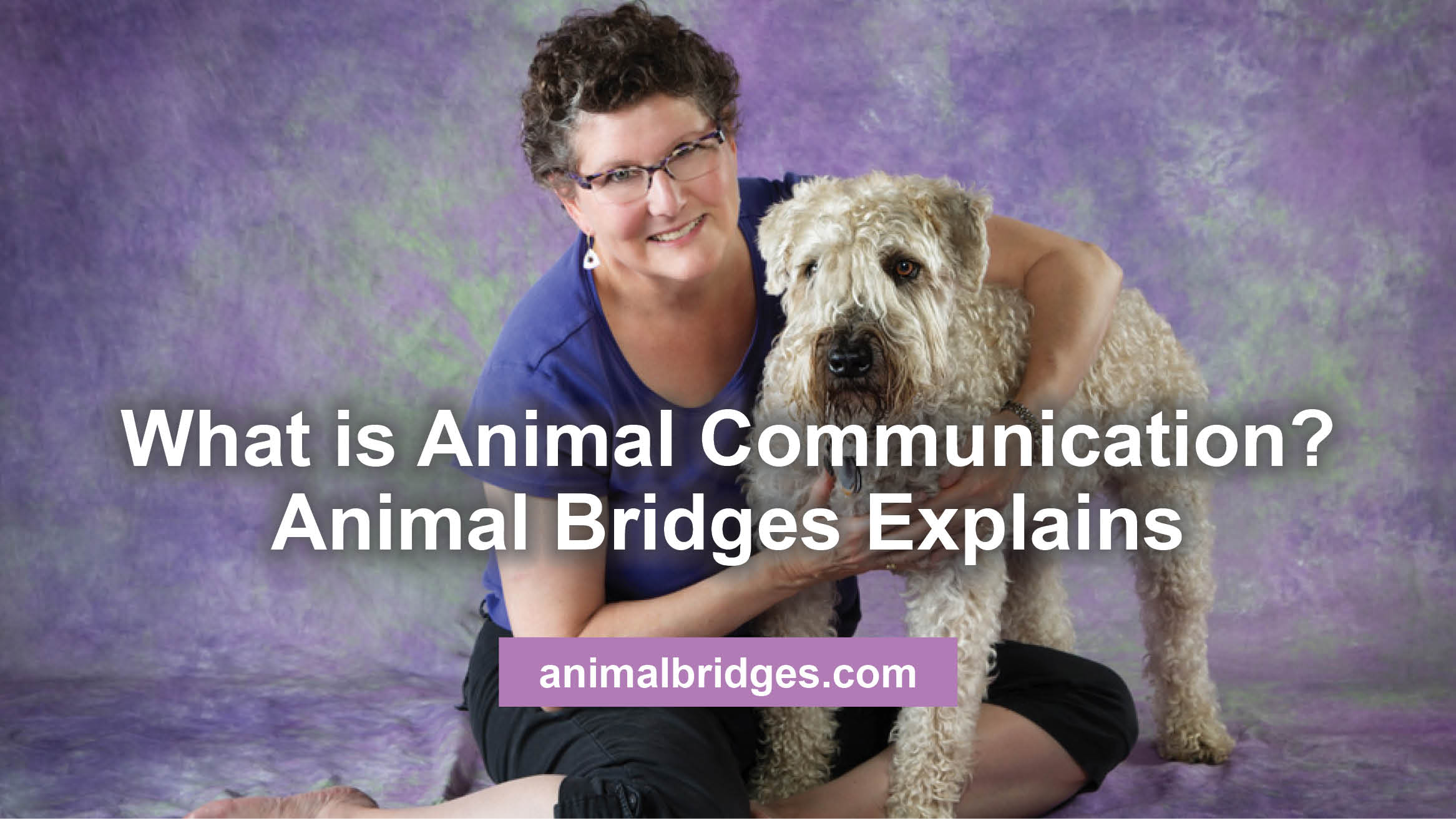 What is Animal Communication? Animal Bridges Explains