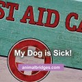 Dog is sick.