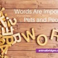 Words are important to pets and people