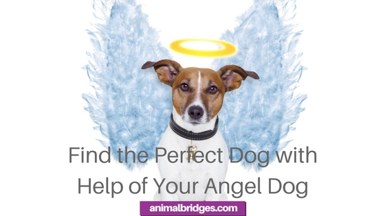 Find the Perfect Dog with Help of Your Angel Dog