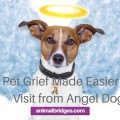 Pet grief made easier by visit by angel dog