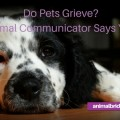 Do pets grieve? Animal communicator says yes!