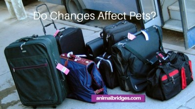 Do changes affect pets