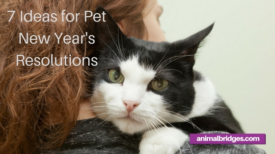 Pet New Year's Resolutions