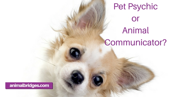 Pet psychic or animal communicator?