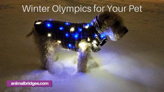 Winter Olympics for your pet