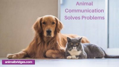 Animal communication solves problems.