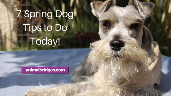 7 spring dog tips