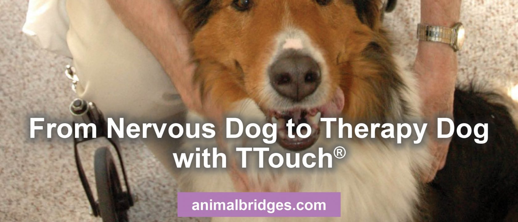 From Nervous Dog To Therapy Dog With Ttouch