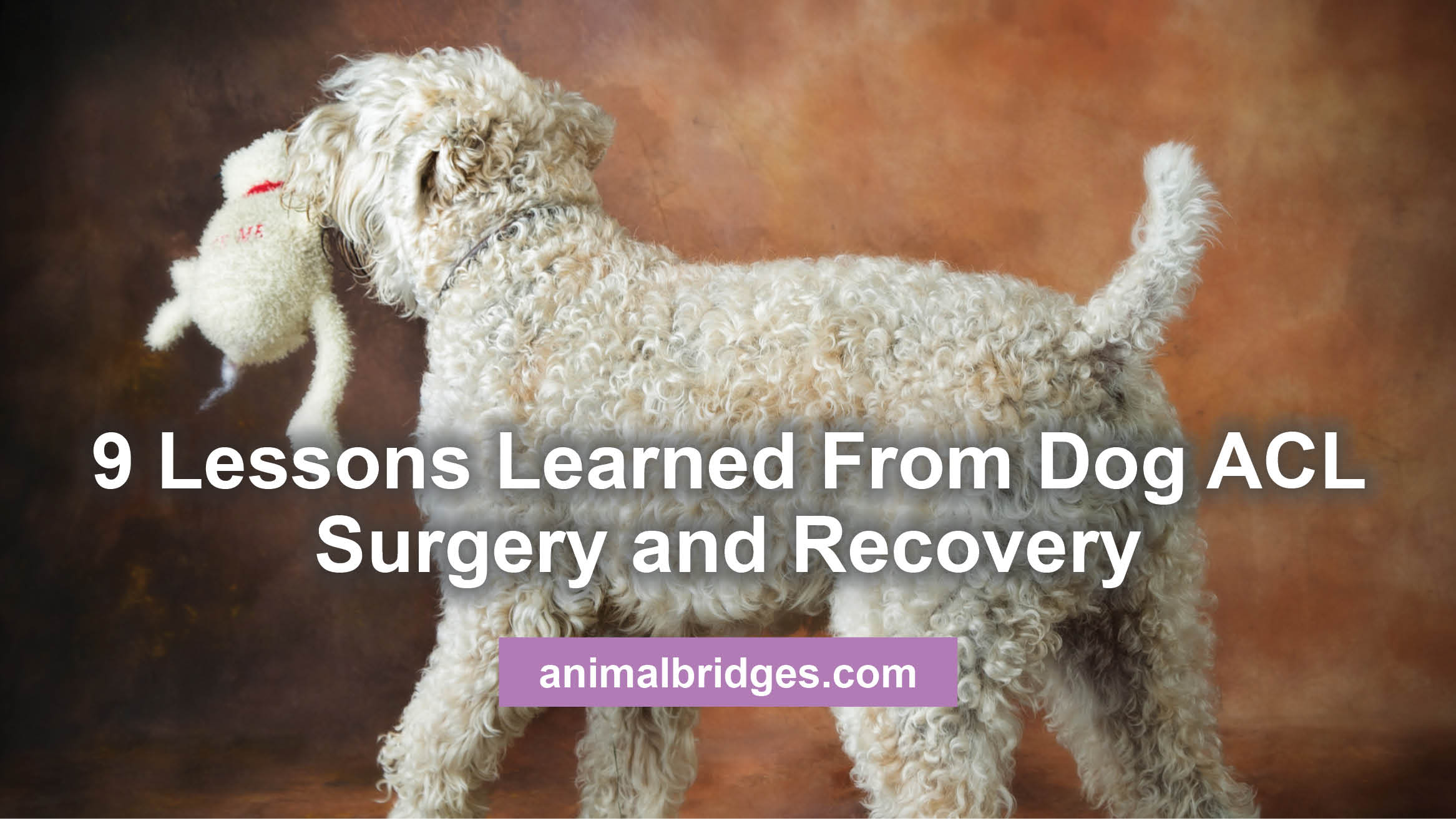 Brilliant 9 Lessons Learned From Dog Acl Surgery And Recovery Bralicious Painted Fabric Chair Ideas Braliciousco